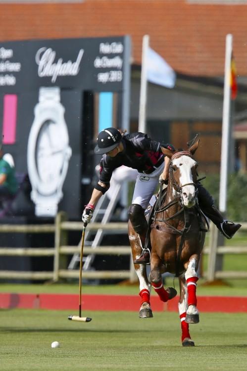 HORSE OK