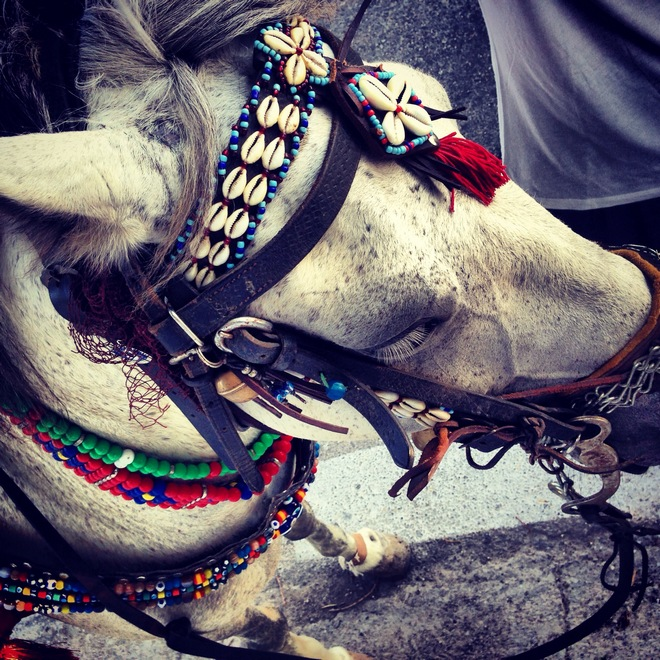 horse-groom