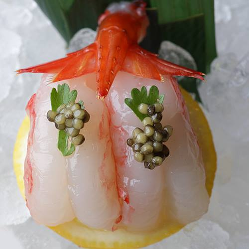Langoustine sashimi...
