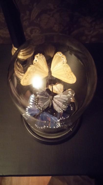 Το κομοδίνο του Νικόλα. Σε ένα βάζο, συλλογή με πεταλούδες...