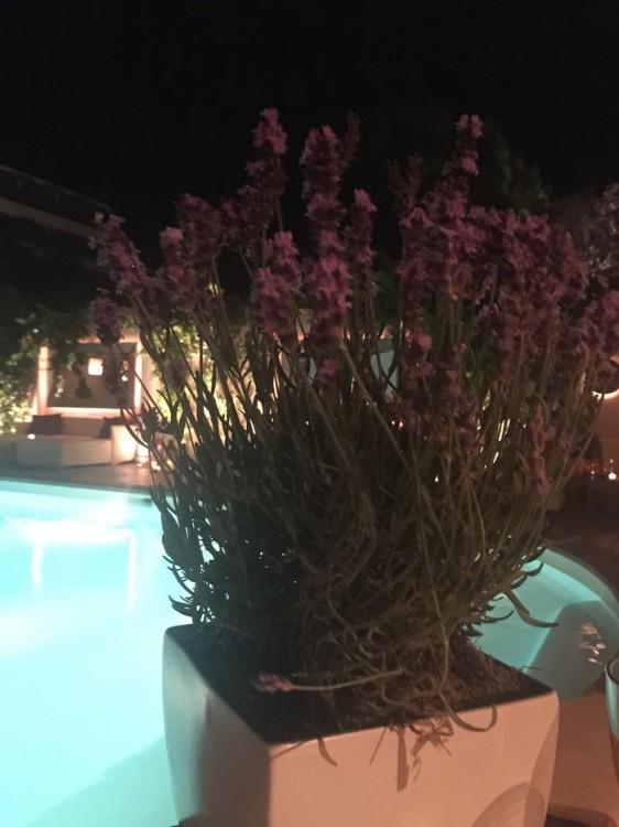 Καθόμαστε στο τραπέζι μας. Βάζα με λεβάντες και φωτισμός από την πισίνα...