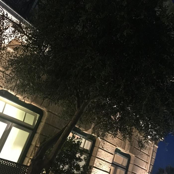 Τα δέντρα με τις ελιές, στην βεράντα του Freud...