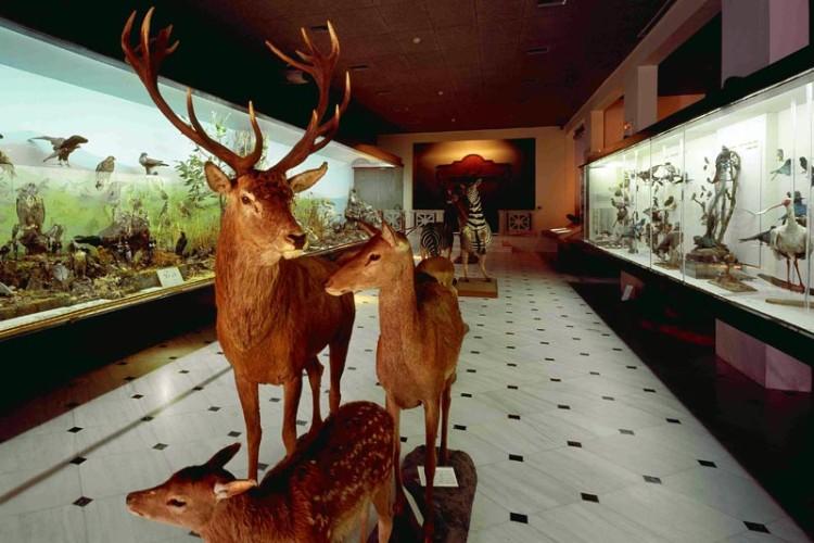 Ελάτε να περάσουμε μία μέρα στο Μουσείο Φυσικής Ιστορίας Γουλανδρή!