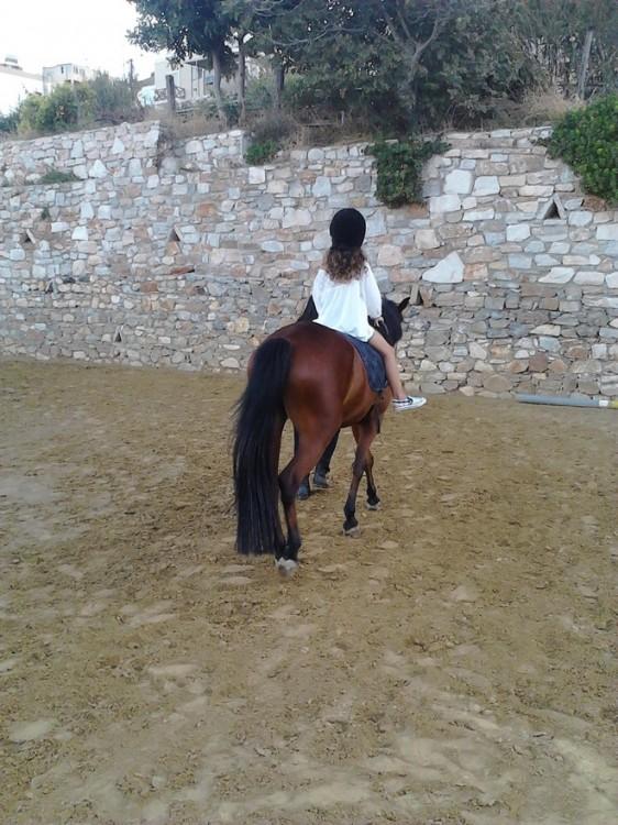 Για ιππασία κάθε απόγευμα με τα άλογα του νησιού