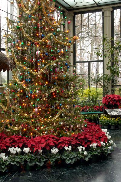 """Ξεχάστε τις παραδοσιακές φάτνες και """"αγκαλιάστε"""" το Χριστουγενιάτικο δέντρο σας με γλάστρες από Αλεξανδριανά!"""