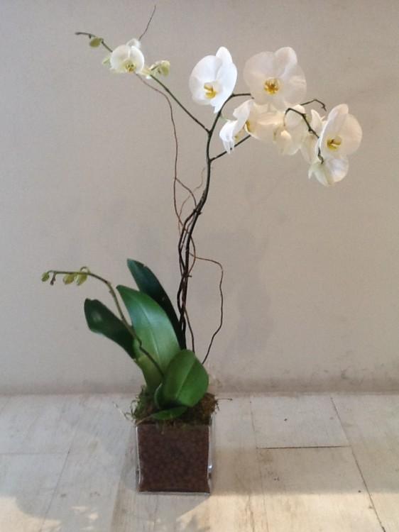 H λευκή Φαλενόψια που μου στέλνει κάθε πρώτη του μήνα το Flower Shop της Antoinetta Koutsouradi για το υπνοδωμάτιο μου.