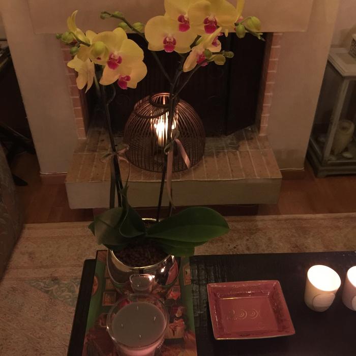 Τα αγαπημένα μου λουλούδια που φροντίζει σε κάθε δείπνο μου να μου στέλνει η Βανέσσα...