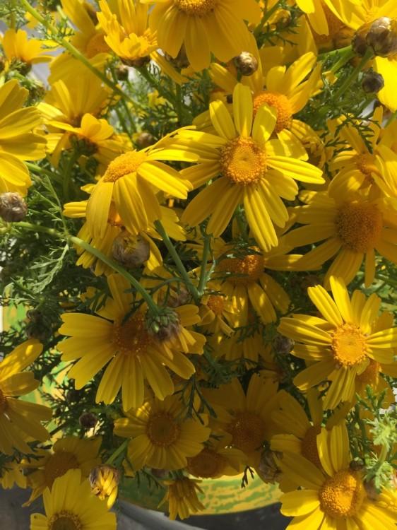 Τα λουλούδια σε όλα τα β'άζα του σπιτιού: Μαργαρίτες...