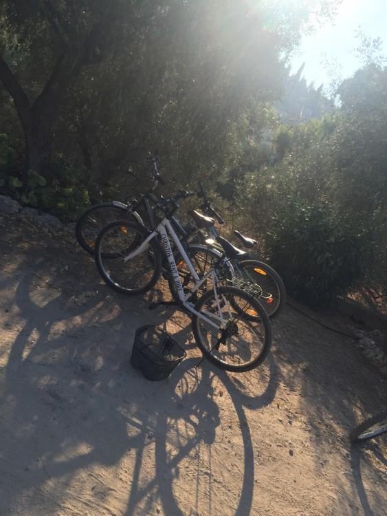 Τα ποδήλατα των παιδιών μας. Με αυτά και με τα καλάθια τους πηγαίνουν να μας φέρουν σύκα και λεμόνια από τα δέντρα...