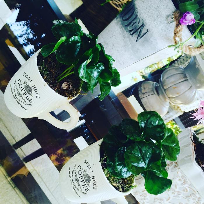 Βάλτε λουλούφια καφέ στα φλιτζάνια σας!