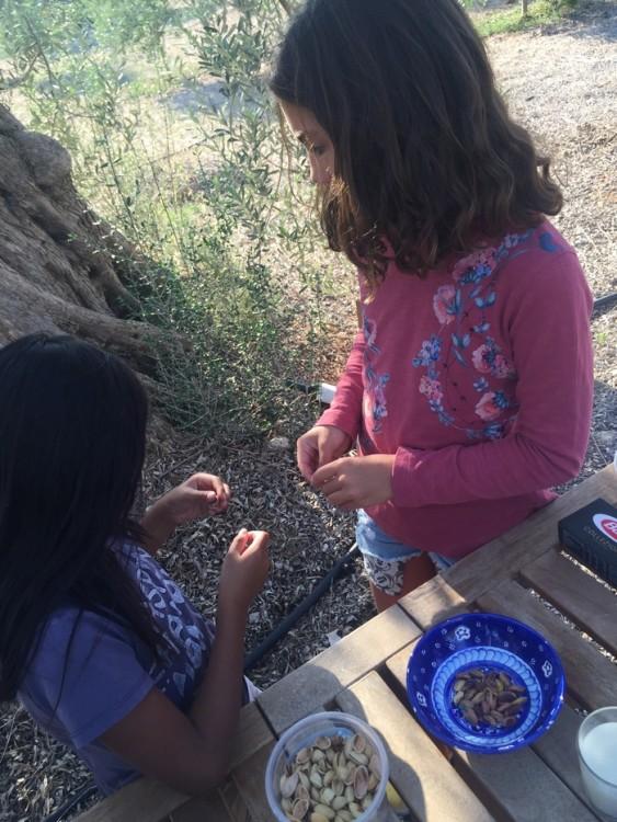 Τα παιδιά καθαρίζουν με τα χέρια τους τα φιστίκια Αιγίνης ώστε να καβουρδιστούν...